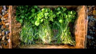 The Story Of The Wondrous Watercress -- Waitrose