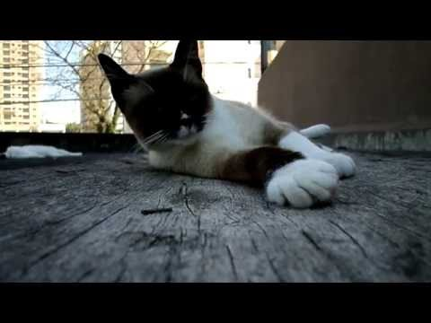 9 minutes of a cute siamese cat