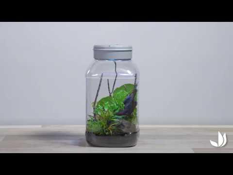 Vidéo] Insectarium : un terrarium pour insectes - Truffaut ...