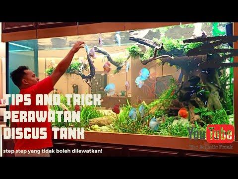 CARA PERAWATAN BERKALA MONSTER DISCUS FISH TANK !! Berikut Tips Dan Trick Juga Alat Yang Digunakan