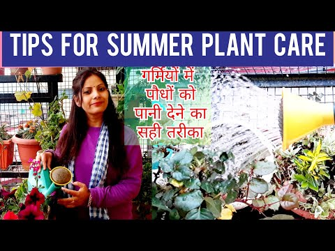 Summer Gardening Tips | How to Take Care of your Plant in Summer | How to Water Plants in summer |