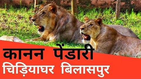 Kanan Pendari Zoo Bilaspur Chhattisgarh | Dk808