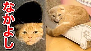短足猫と甘えん坊の仲間たちの様子がこちら