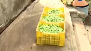 Krishidarshan - 22 November 2017 - कडीपत्ता लागवड – यशोगाथा.