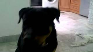 FUNNY DOG.mp4