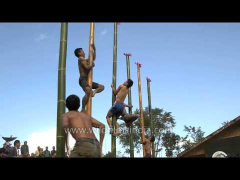 Naga youths climbing a vertical bamboo pole at Hornbill Festival