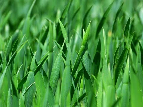 How to grow Bermuda Grass | Easy tips how to Plant Grass in summer