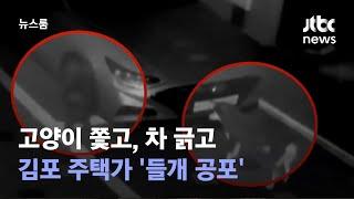 고양이 쫓고, 차 긁고…김포 주택가 '들개 공포' / JTBC 뉴스룸