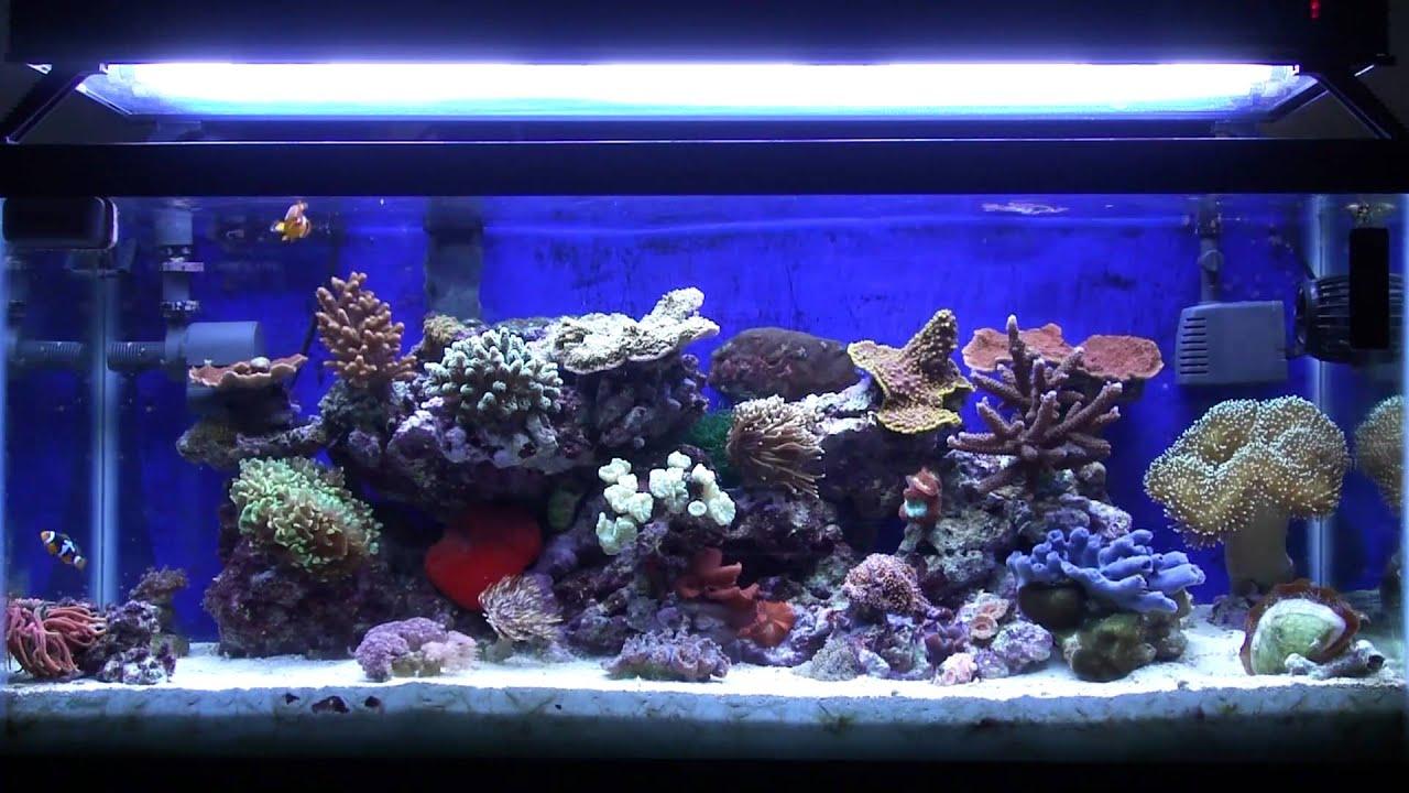 Fish tank in york - Reef Aquarium New Old Tank Syndrome