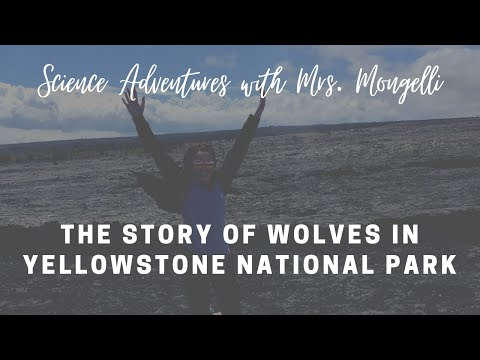 The story of wolves in Yellowstone National Park
