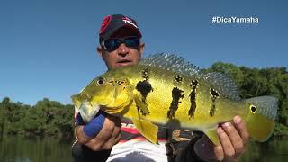 Veja como pescar tucunaré em meia água - Dica Yamaha com Johnny Hoffmann