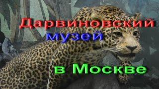 видео Дарвиновский музей в Москве