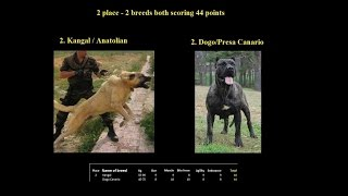 World's Most Powerful Dogs (top 35)