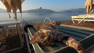 Tabby cat living on the beach is so cute