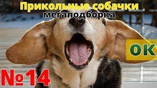 #14 Смотреть приколы с собаками (МЕГАПОДБОРКА с кукурузой)