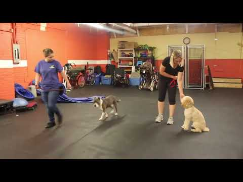 Dog Training   After Fergie arrived, we changed his state of mind   Solid K9 Training Dog Training