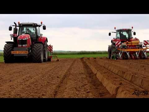 Semis de carottes 2015