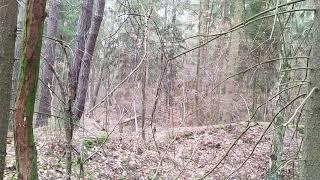 Прогулка в лесу в феврале 2020 Чехия недалеко Праги