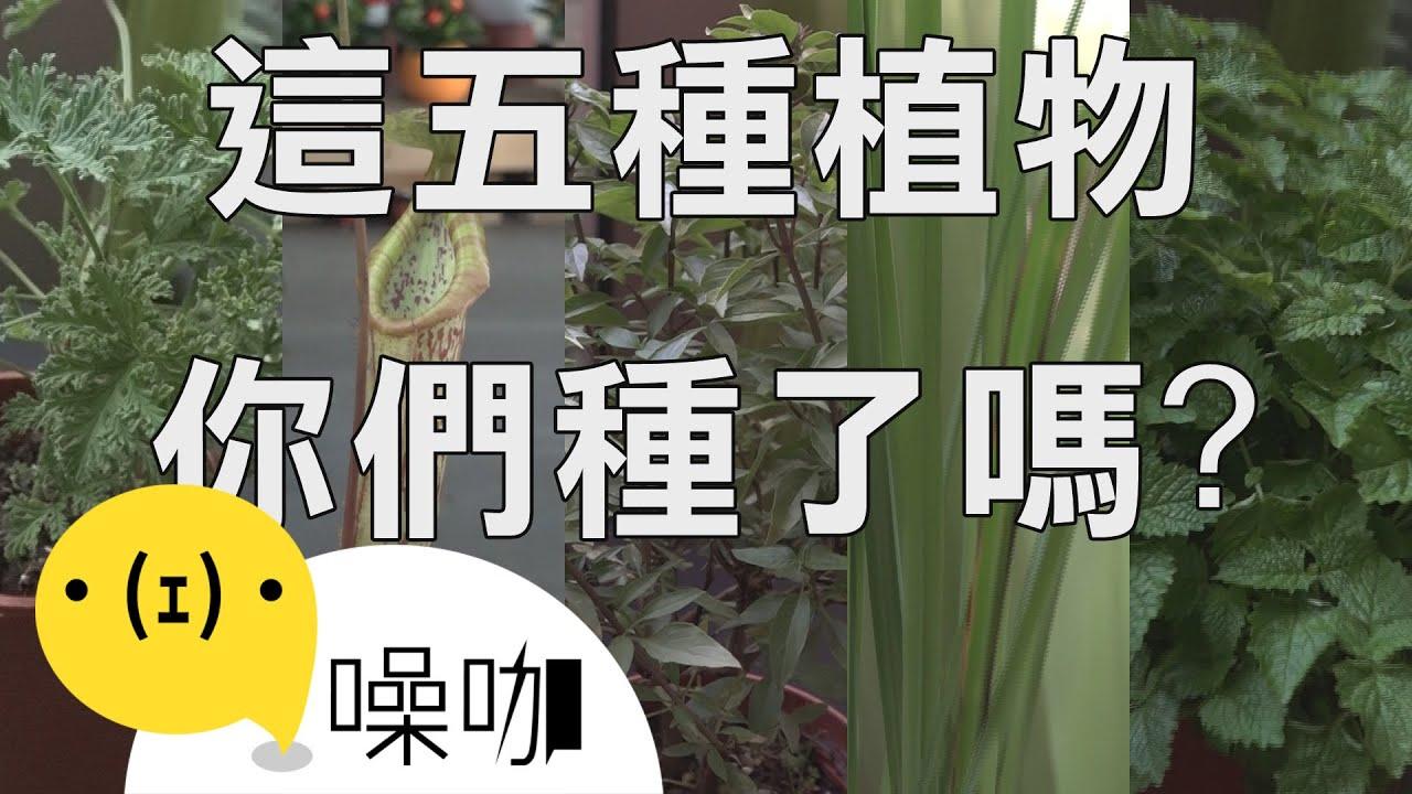 蚊子不要來!種這些植物就能防蚊 - YouTube