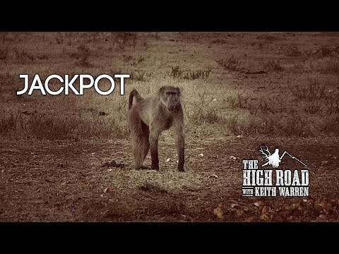 "Impala, Blue Wildebeest, and a Baboon - ""Jackpot"""
