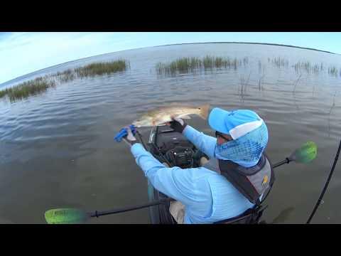 Redfish Smash In Port O'Connor