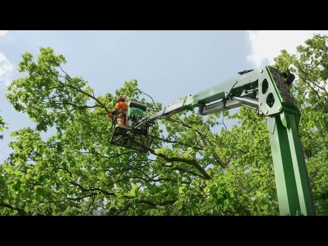 Leguan 190 provides more outreach than other similar sized aerial lifts (German Tree Care company)