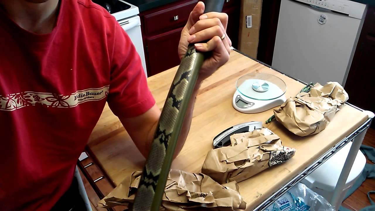 unboxing the backyard bower u0027s bow youtube