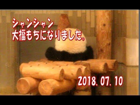 逆立ちからの大福もちシャンシャン (スライド有)�.07.10 ABC Panda Movies