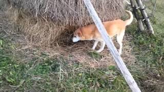 Что делает собака жесть(, 2015-11-28T11:43:30.000Z)
