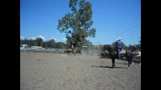 Tri de bétail les jeunes du Country Pony Ranch aux Pradeaux