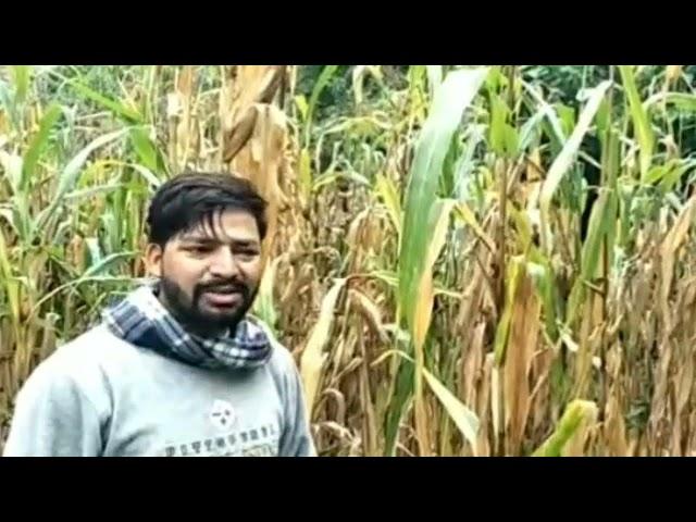 चम्बा ! मौसम की बेरुखी के चलते किसान काफी निराश !