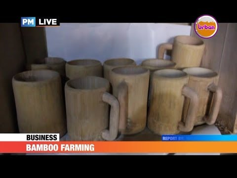 PMLive: BAMBOO FARMING – Man Stuck with Utensils Made Out of