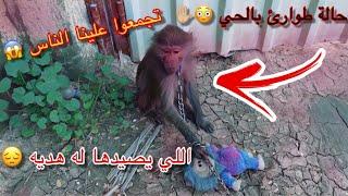 القرده هربت بالحاره !! وطلعت انا وجاك نبحث عنها 😢