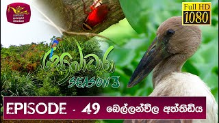 Sobadhara - Sri Lanka Wildlife Documentary | 2020-03-06 Bellanwila Aththidiya Thumbnail