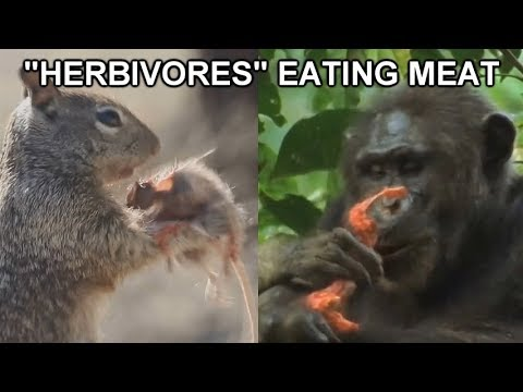 """Herbivores"" Eating Meat Compilation - All Animals Are Omnivores - The Vegan Nightmare"