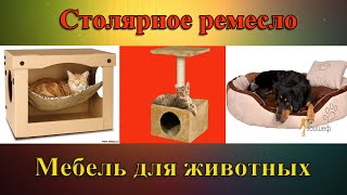 Мебель для животных. Видео с приколами.