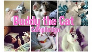 Buddy the Cat | Compilation of videos