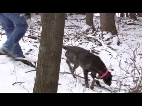 Training Your Dog To Hunt Shed Antlers