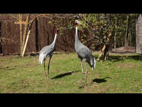 Agora : Le parc des oiseaux