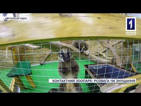 Первый Городской. Кривой Рог: Контактні зоопарки: чи безпечні для відвідувачів та тварин?