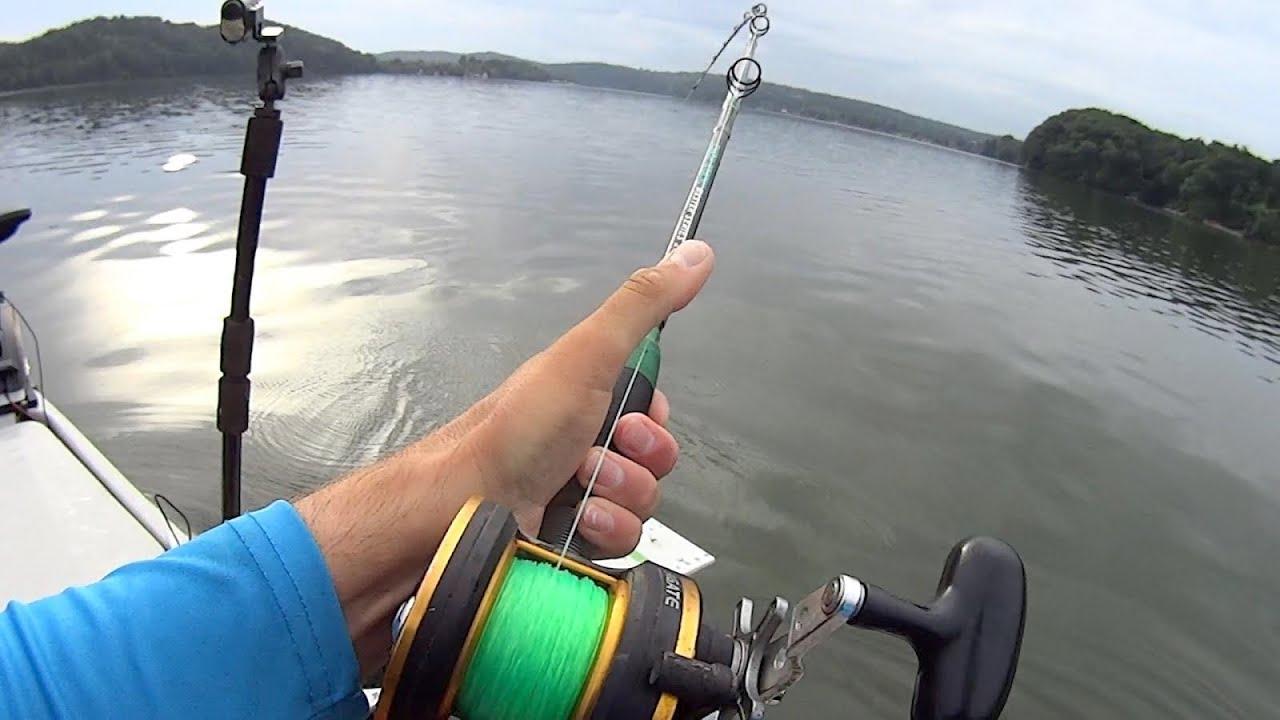 Humping Around With Some Catfish