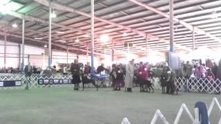 Aoac Class Travis County, Tx Doberman Pinscher 10-28-12