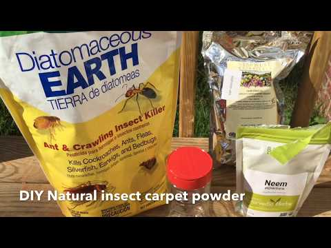 DIY  The Best Natural Flea, Pest Control, And Insect Killing Carpet Powder