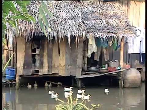 Cá Và Lúa [Du Lịch Văn Hóa Việt Nam]