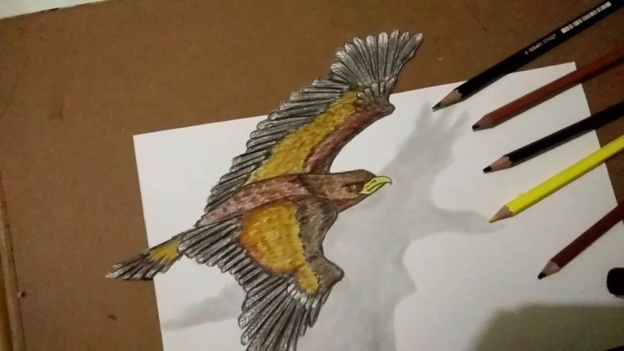 Unduh 1050 Gambar Burung Elang Sketsa Paling Keren Gratis