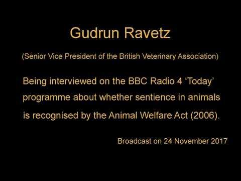 Gudrun Ravetz (BVA) on Animal Sentience , the EU Withdrawal Bill & the Animal Welfare Act (2006)
