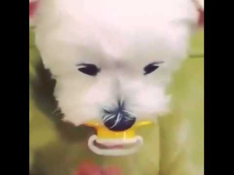 puppy pacifier youtube