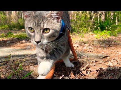 Kitten Goes For A Walk | Leash Training Progress