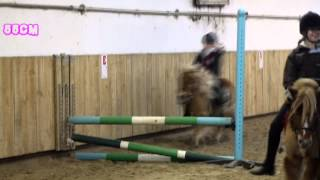 Puissance à shetland   Cours poney.