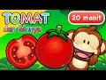 Lagu Anak | Tomat dan Lainnya | 20 Menit